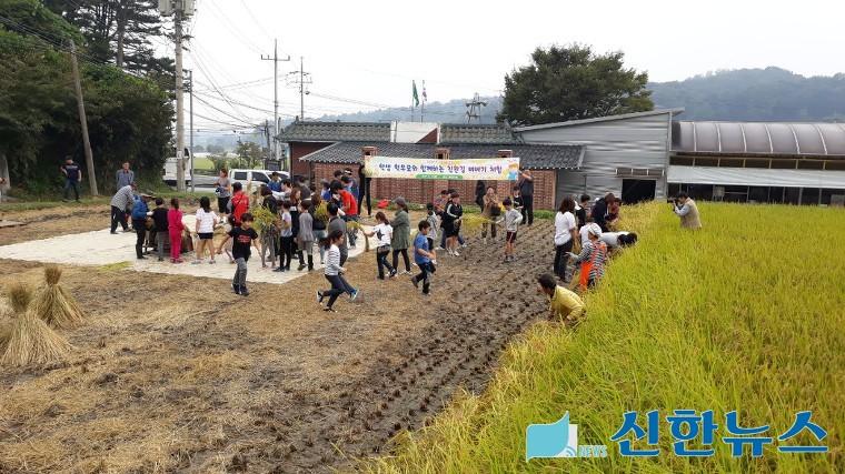성남지역 학교급식 친환경 쌀 수확의 현장가다