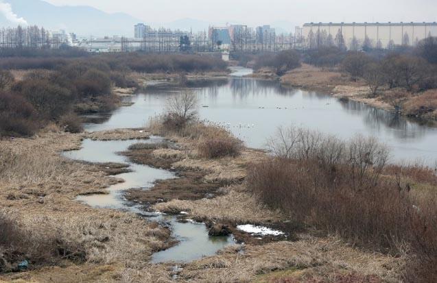 광주 황룡강 야생조류 분변 H5형 A..