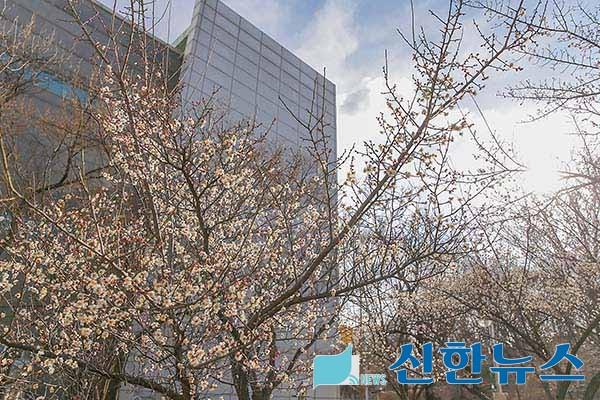 【의왕시】따뜻한 봄 소식 매화꽃