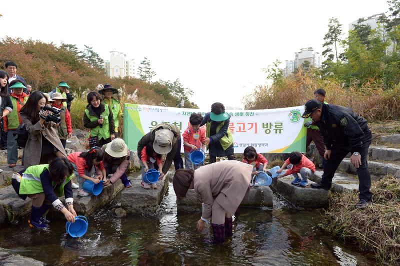 성남시 운중천에 토종 민물고기 4000마리 방..