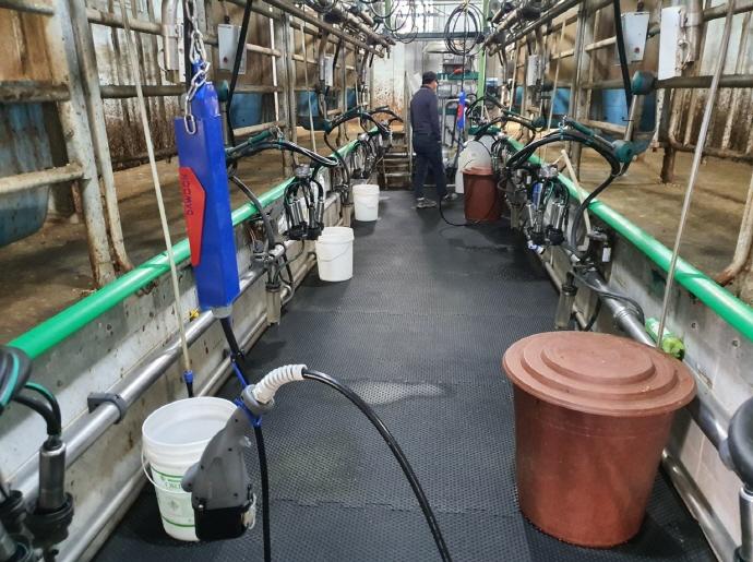 용인시, 관내 낙농 농가 2곳에 젖소 유두 자동세척기 보급