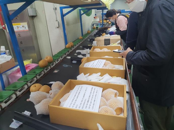안성시, 우박피해농가 농산물 팔아주기 성황리에 추진